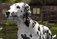 Dog Simulator 3D