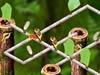 Orientar as Formigas