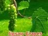 Jigsaw Grapes