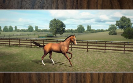 My Horse - 1