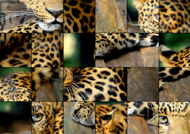 Animals Jigsaw - 1