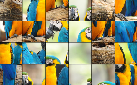 Animals Jigsaw - 4
